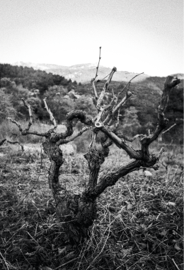 Platon´s-Vineyard.Heer